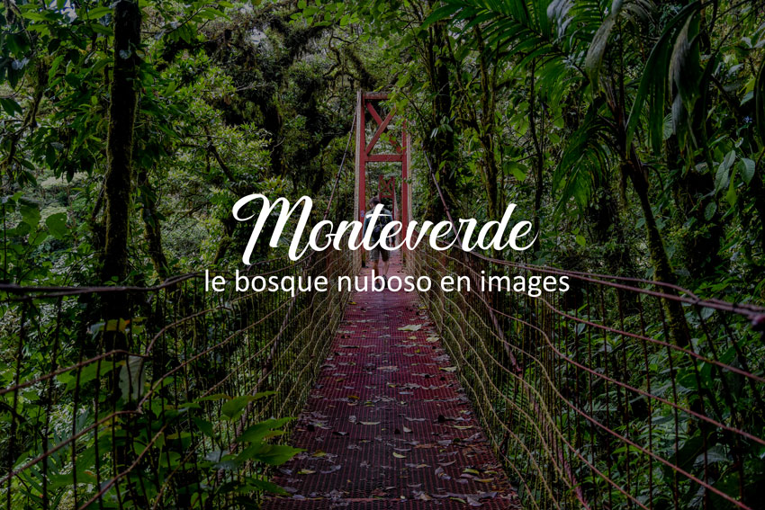 Photo article Monteverde photos